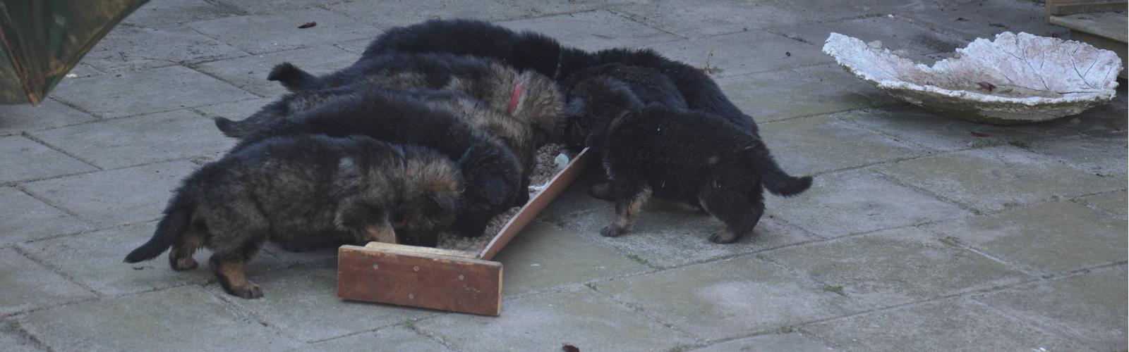 Pups-D-nest